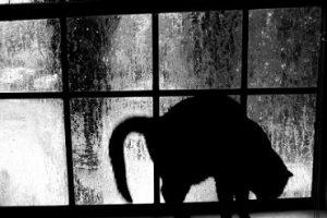 El Gato Negro - Cuentos Cortos de Terror