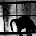 el-gato-negro cuentos de terror