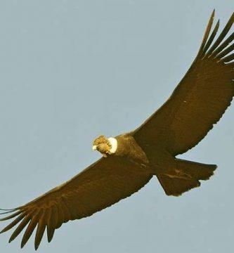 Mito del Condor - Mitos de Terror Cortos
